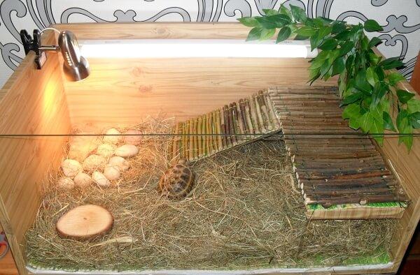 Наполнитель сено в террариум для черепах