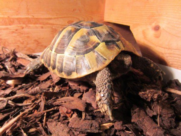 Наполнитель кора в террариум для черепах