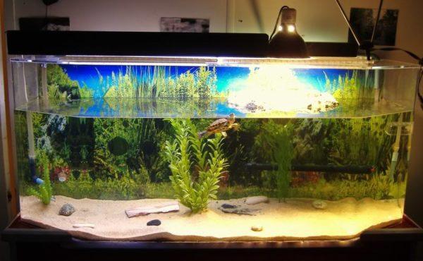 Обустроенный аквариум для красноухой черепахи