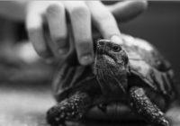 Черно-белое фото черепахи