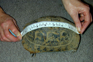 Измерение черепахи